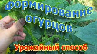 Формирование и выращивание огурцов. Урожайный способ (укр.)(, 2016-06-26T16:51:12.000Z)