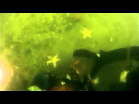 Linda Gotti. New York. Scuba Diving