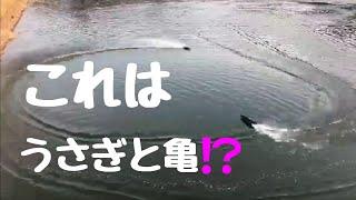 KYOSHO JET STREAM GP-10 & Feilun FTO11で遊んでみた.