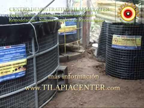 Cultivo de tilapia roja en recirculaci n del agua cual for Tanques para cachamas