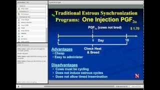 Estrus Synchronization in Heifers and Cows