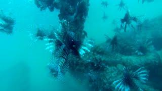 FGCU Lionfish Derby 2015 Gulf of Mexico
