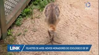 Conheça os filhotes de aves que serão atração no zoológico de São Paulo