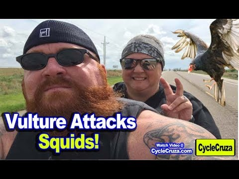 Vulture ATTACKS Biker Squids & My Close Call with COP from YouTube · Duration:  7 minutes 43 seconds
