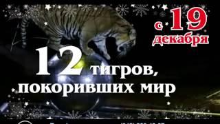 """Новогоднее шоу """"Королевские тигры"""" в Перми"""