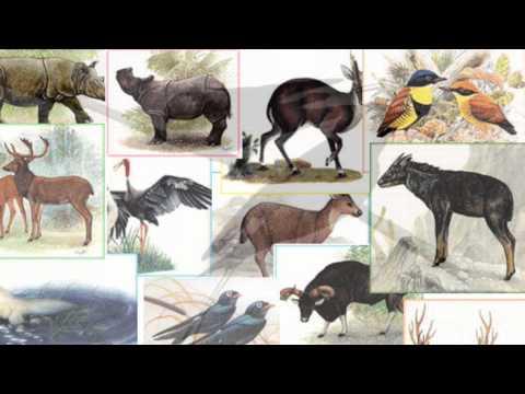 สัตว์ป่าสงวนและสัตว์ป่าคุ้มครอง
