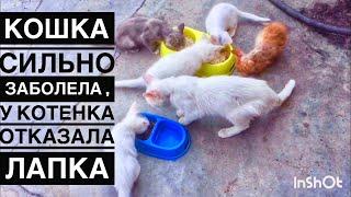 Кошка хочет жить😩 а у маленького отказала лапка, как мы их лечим и кормим.