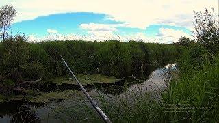В этом ручье я еще таких не ловил, Вот так ручей!!!Рыбалка на спиннинг.