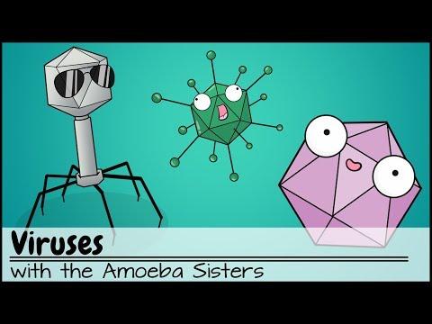 Viruses Updated