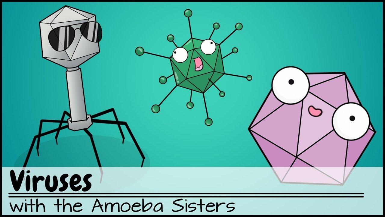 hight resolution of viruses updated