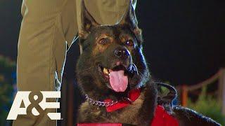 Battle of the Shepherds, K9 Eddy Races Against K9 Cam | America's Top Dog (Season 1) | A&E