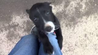 кусачий и играющий щенок лайкни меня