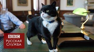 Кот Палмерстон покажет всему МИДу, как ловить мышей