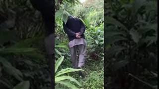 Cardamom Effected by viral disease.(Nepal)