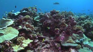 """The Cook Islands – """"Ocean Wealth"""""""