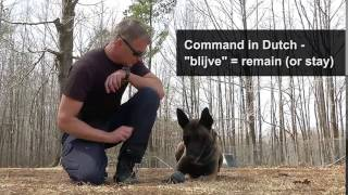 How Is A Police K9 Trained