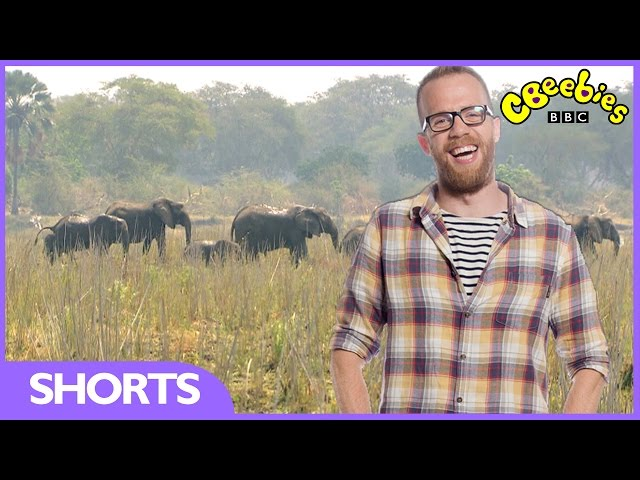 CBeebies | My Pet and Me African Special | Elephants