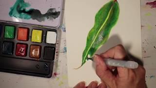 Demonstration with Cretacolor Aqua Brique - Gum leaf painting