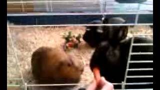Feeding Carrots To Ariel And Zuzu  (2 Of 2)