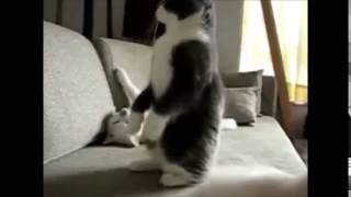 Michael Jackson Smooth Criminal Cats edition FROMtv