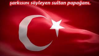 papagan sultan
