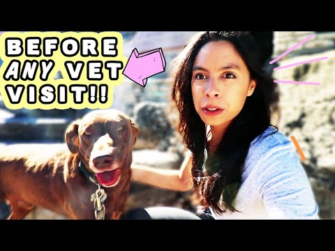 DON'T GO TO THE VET BEFORE WATCHING THIS  Tips for anxious and nervous dogs!!