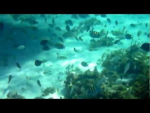 Underwater video using a $60 Vivitar Camera of Marine life off Georgia's coast.