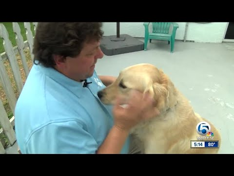 Therapy dogs coming to the rescue in Vegas