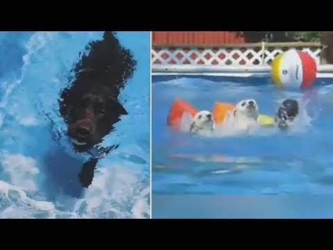 Funny Dog Swimming Videos - Funny Dog Videos