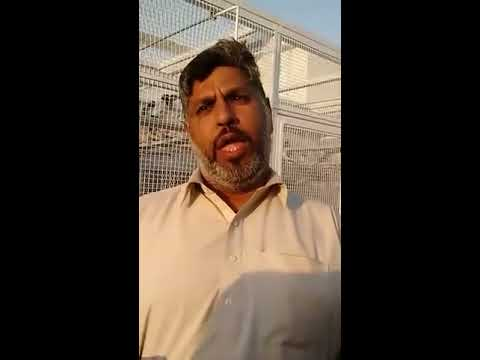 Asian Tiger Ustad Mulla Nadeem Taran wala Loft