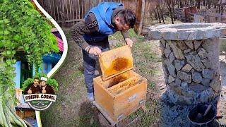 Au murit albinele de la casuta din padure si terminam de placat fantana cu piatra!