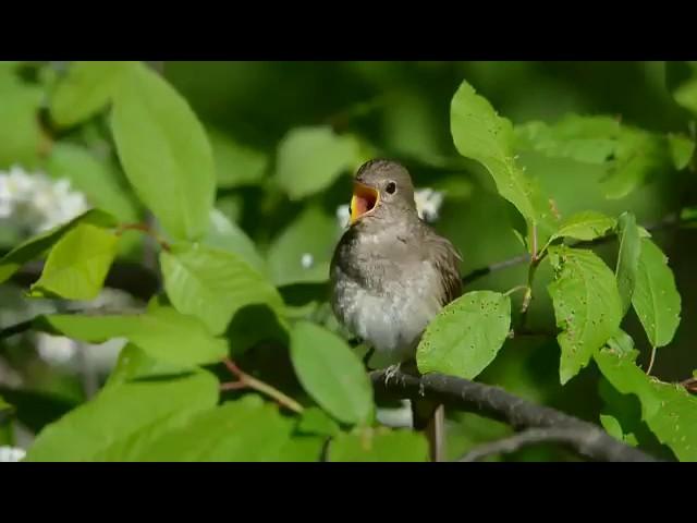 Весна пришла! Птички поют!