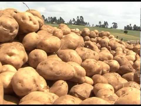 Potato Value chain: EIAR CIP CFC