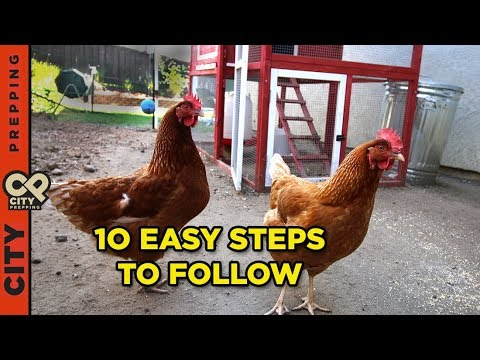 How to raise chickens in your backyard (10 tips) - How To Raise Chickens In Your Backyard (10 Tips) - YouTube