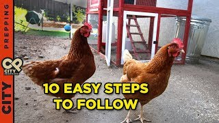 How to raise chickens in your backyard (10 tips)