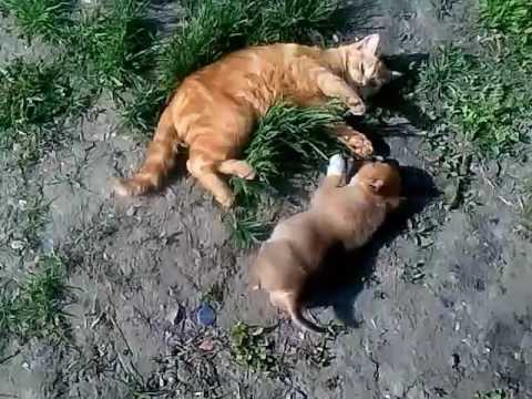 Cat and dog funny fight!