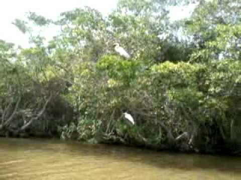 Casitas veracruz manglares youtube for Casitas veracruz