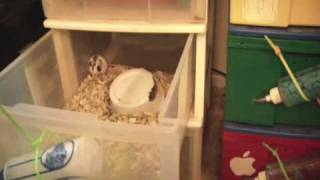 Pet Show - Rodent Breeding and Lucy Update!