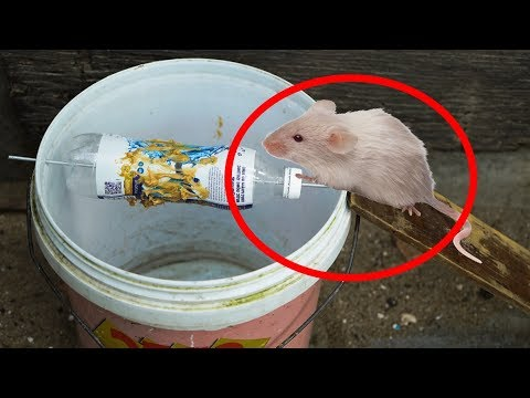 how to make a bucket mouse trap rat trap youtube. Black Bedroom Furniture Sets. Home Design Ideas