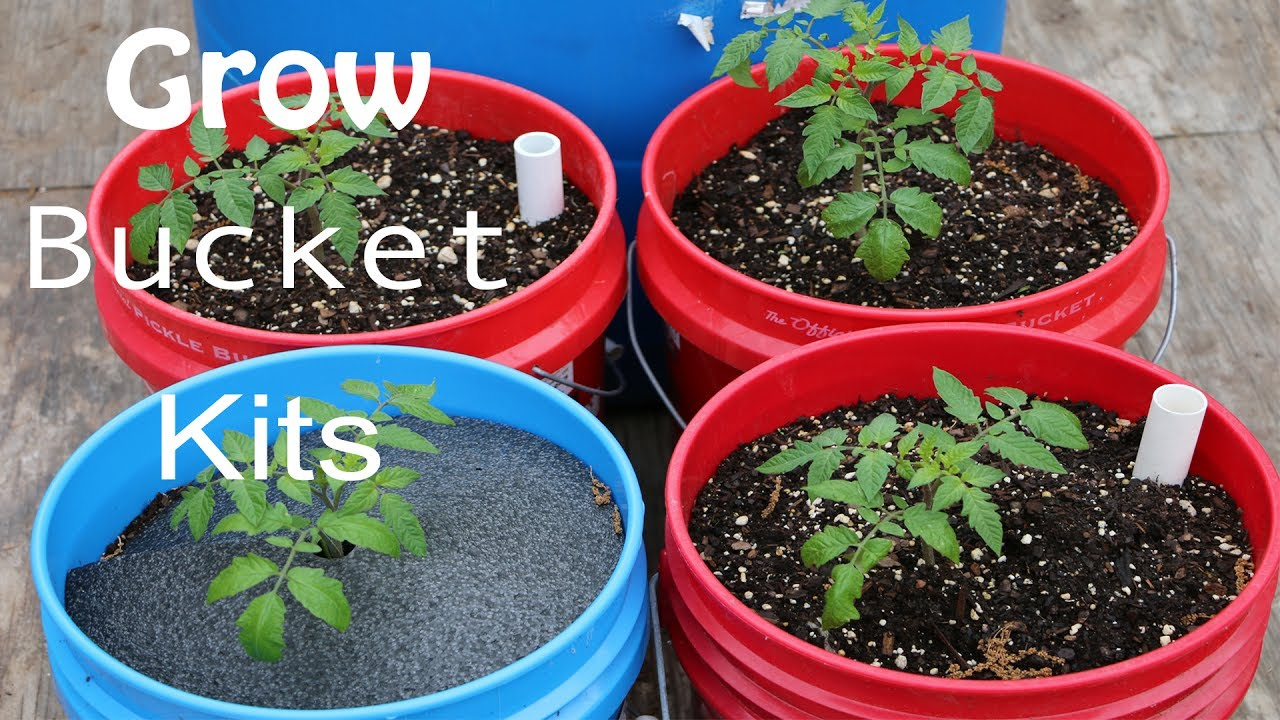 How To Grow A Garden In A 5 Gallon Bucket YouTube