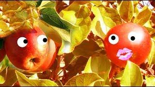 #Humour zen : Quand les pommes parlent de Dieu et de sagesse ! + musique relaxante-blagues-F.Amathy