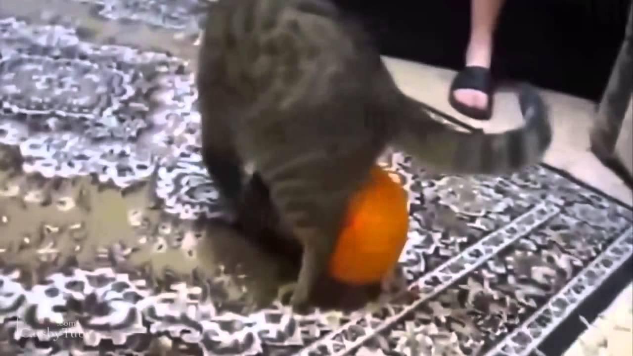 попка видео самых кошмарных проделок с попрыгунчиками пациенткам