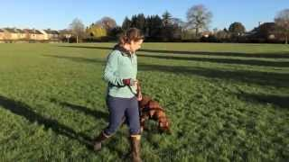 Loose Leash Walking - With Betsy The Boxer