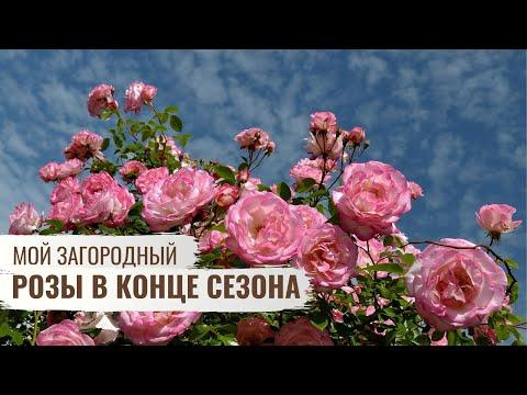 Розы в конце сезона \\ Мой Загородный \\  6 серия