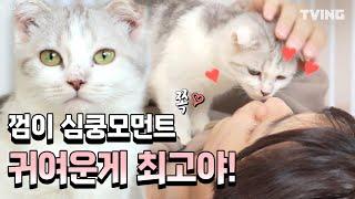 [냐옹은 페이크다] 세젤예 서열1위 껌이 보고가실게요~ (우석, 선호, 신동엽, 오정세)   Decoding Meow