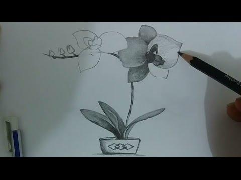 Menggambar Bunga Anggrek Menggunakan Pensil Youtube
