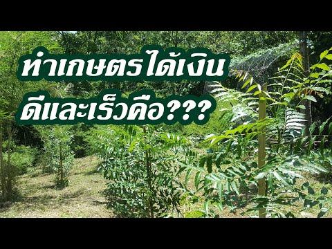ดีจริงสร้างรายได้จากการทำเกษตร ของนายช่างบ้านๆ #แจกพันธุ์พริกเครือพริกต้น1/2563