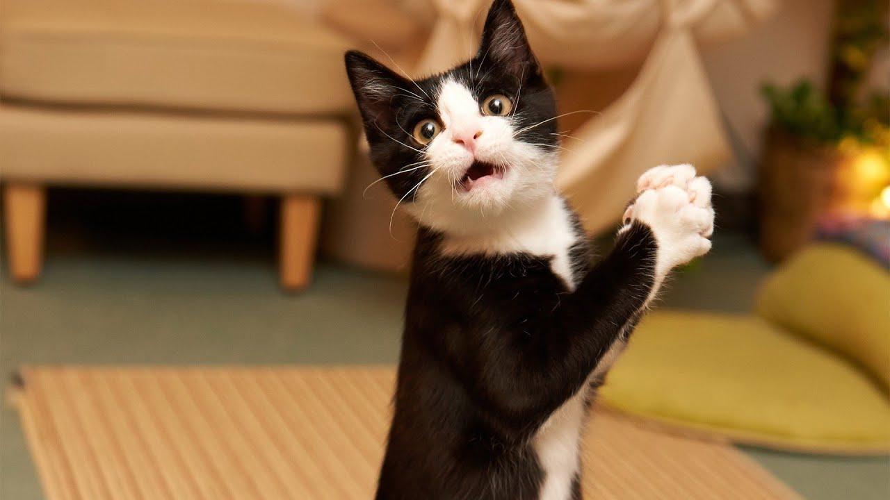 Видео приколы про кошек! Испуганные кошки Подборка №3!