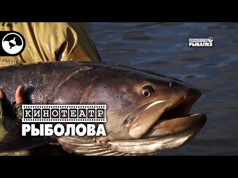 Таймени реки Тугур. Часть вторая | Кинотеатр рыболова