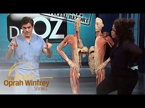 Dr. Oz Illustrates How the Human Body Deals with Stress | The Oprah Winfrey Show | OWN